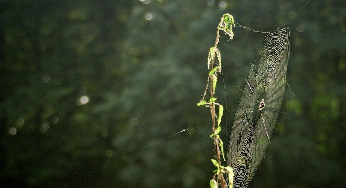 Grafika przedstawiająca pajęczynę na gałęzi drzewa